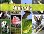 Can You Spot The Difference Animals